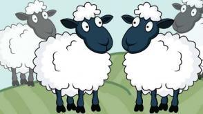 cartoon of nearly identical sheep