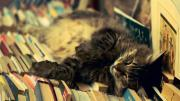 Photo of cat sleeping on books.