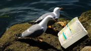photo of two sea birds staring at a book